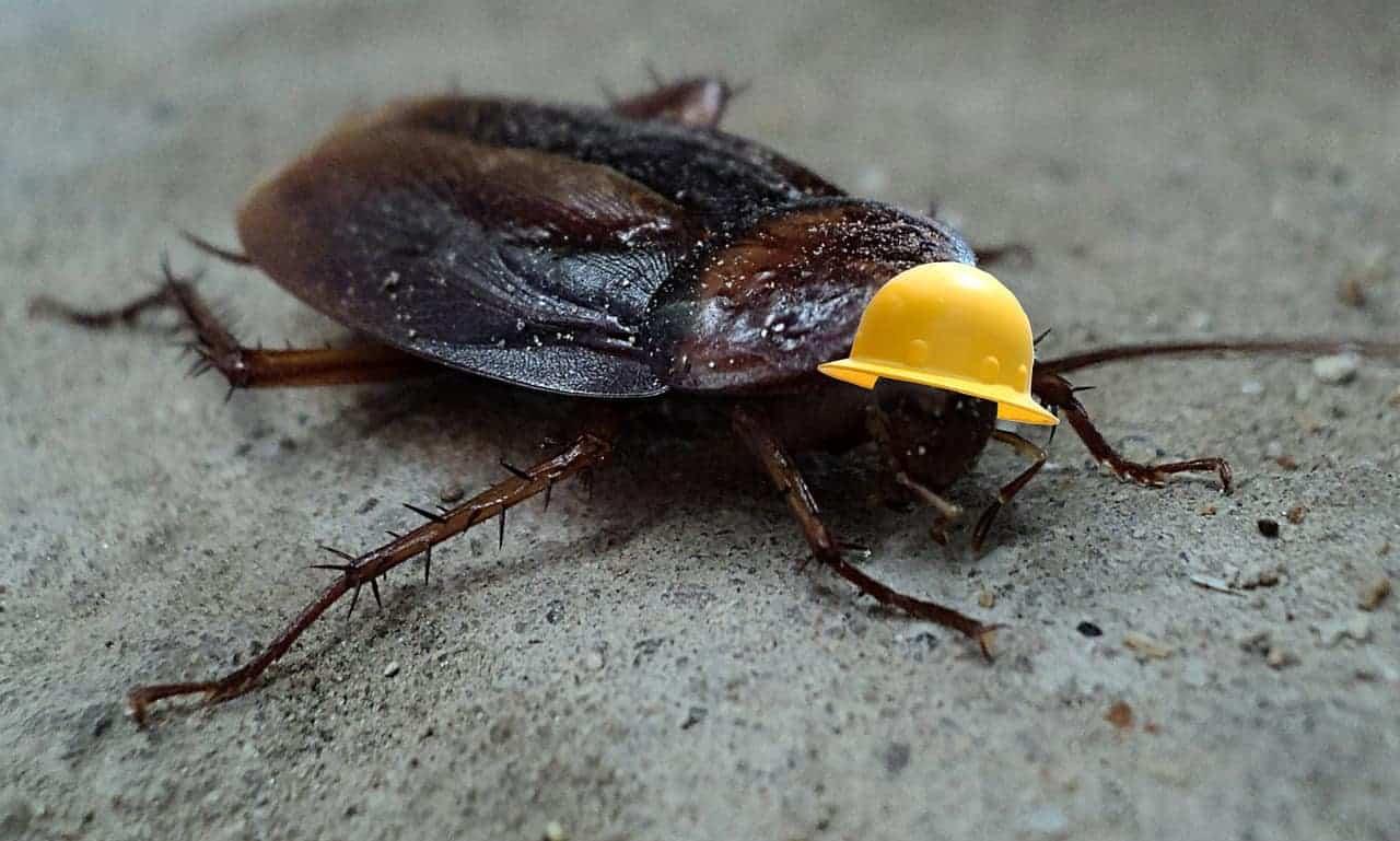 cockroach with helmet
