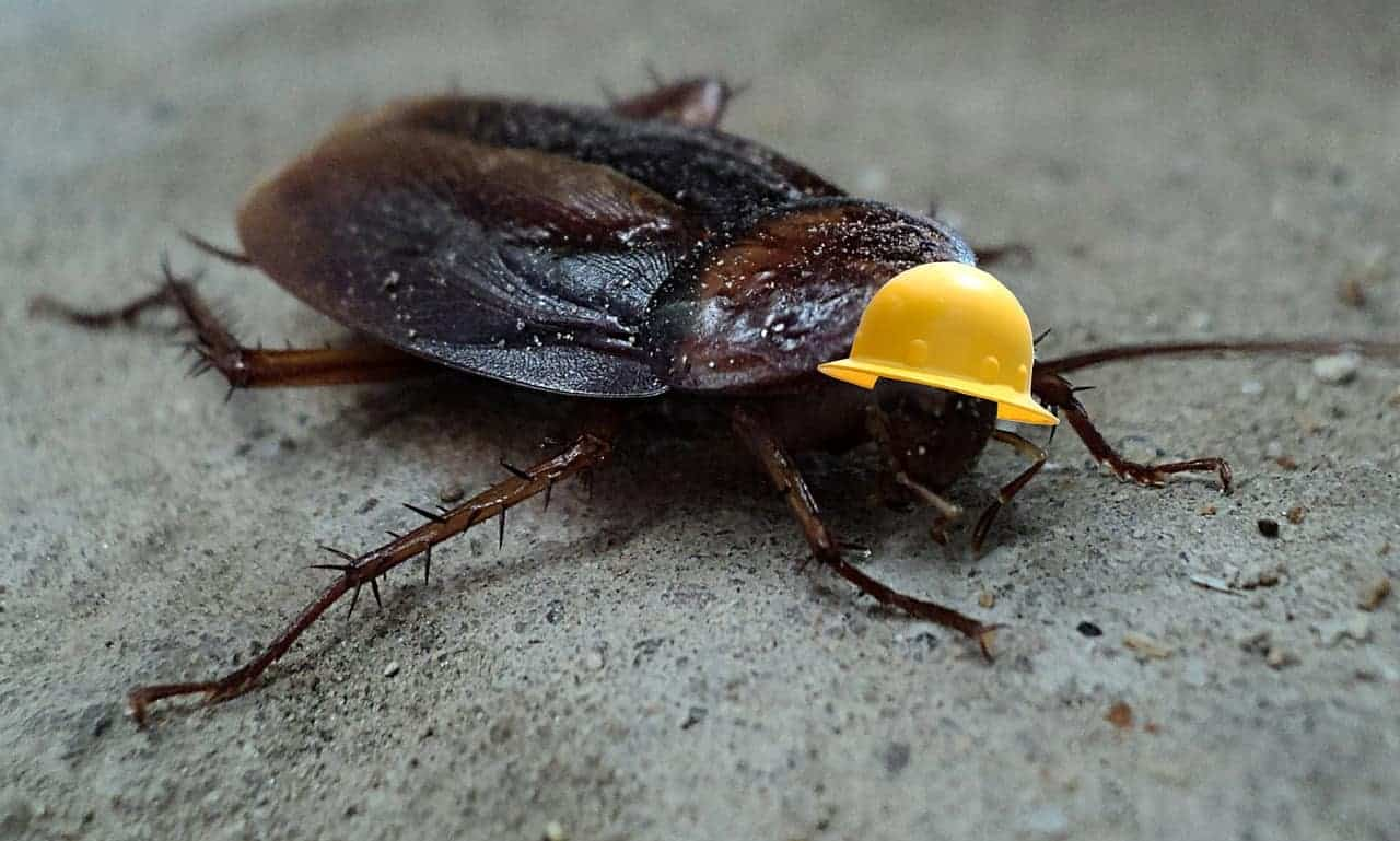 cockroach with helmet