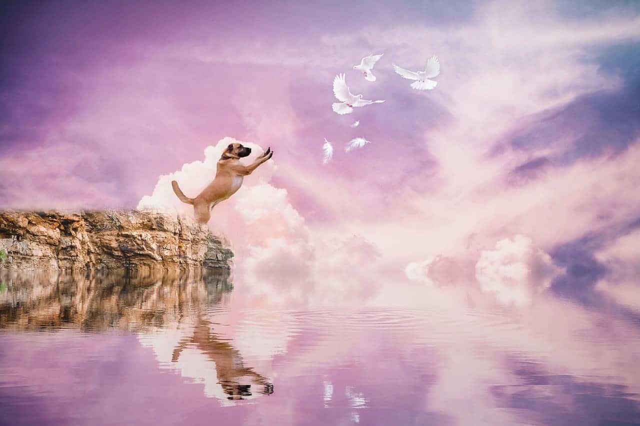 after life dog