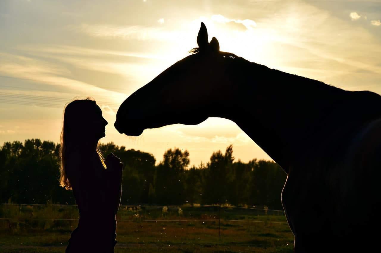 silhouette girl horse
