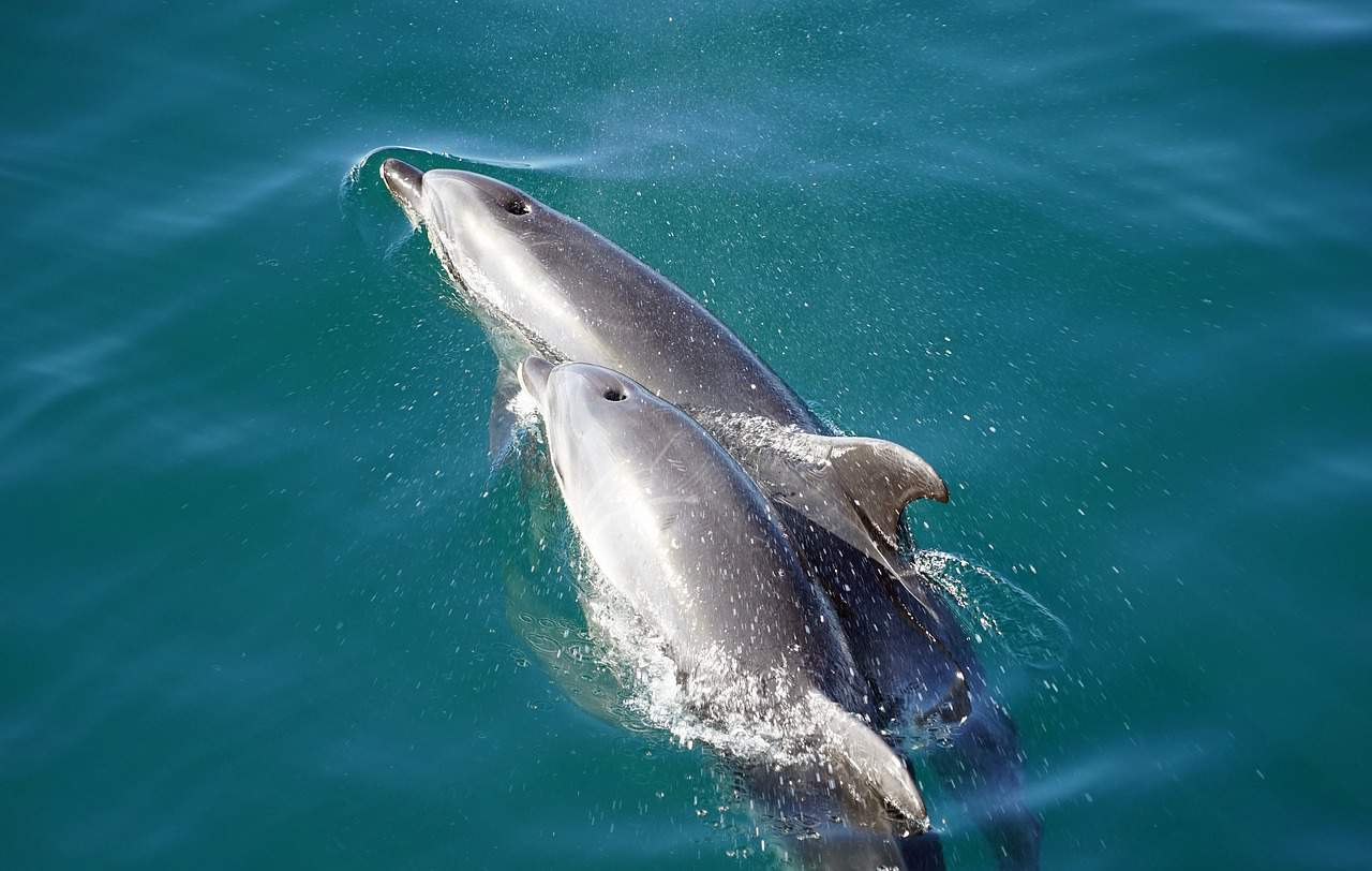 gray dolphins babies