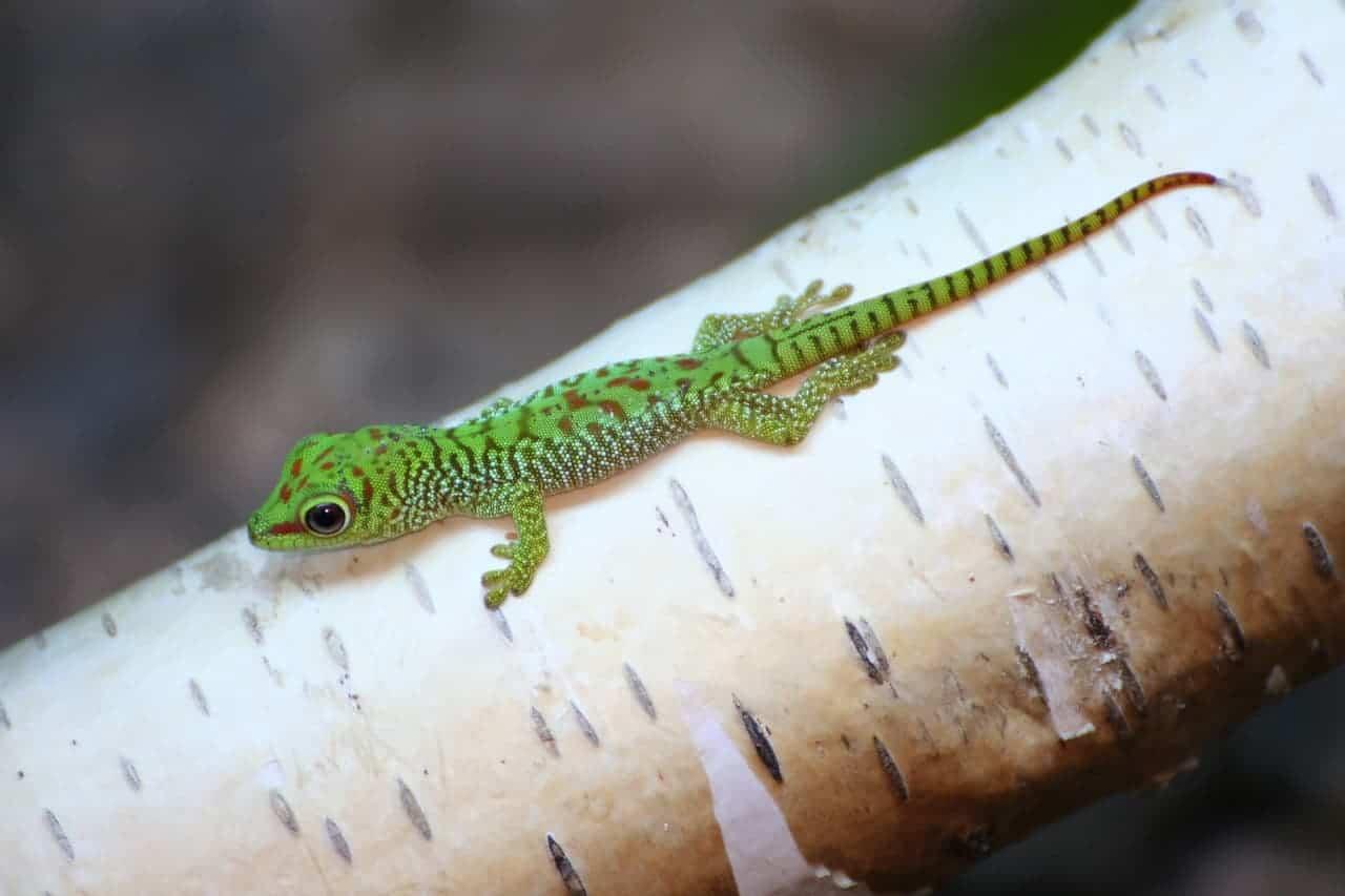 baby lizard on branch