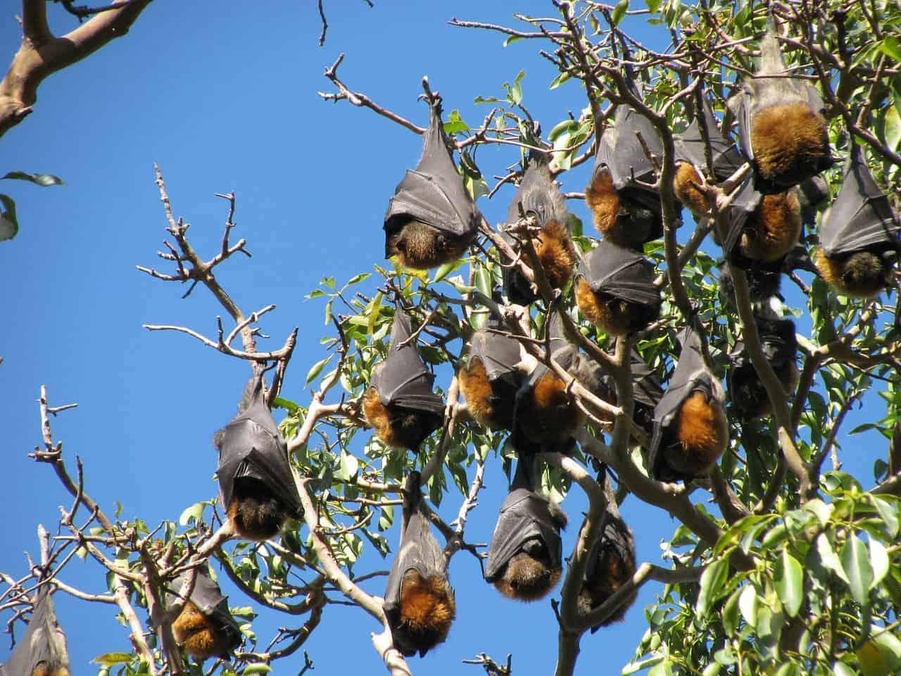 bats not flying