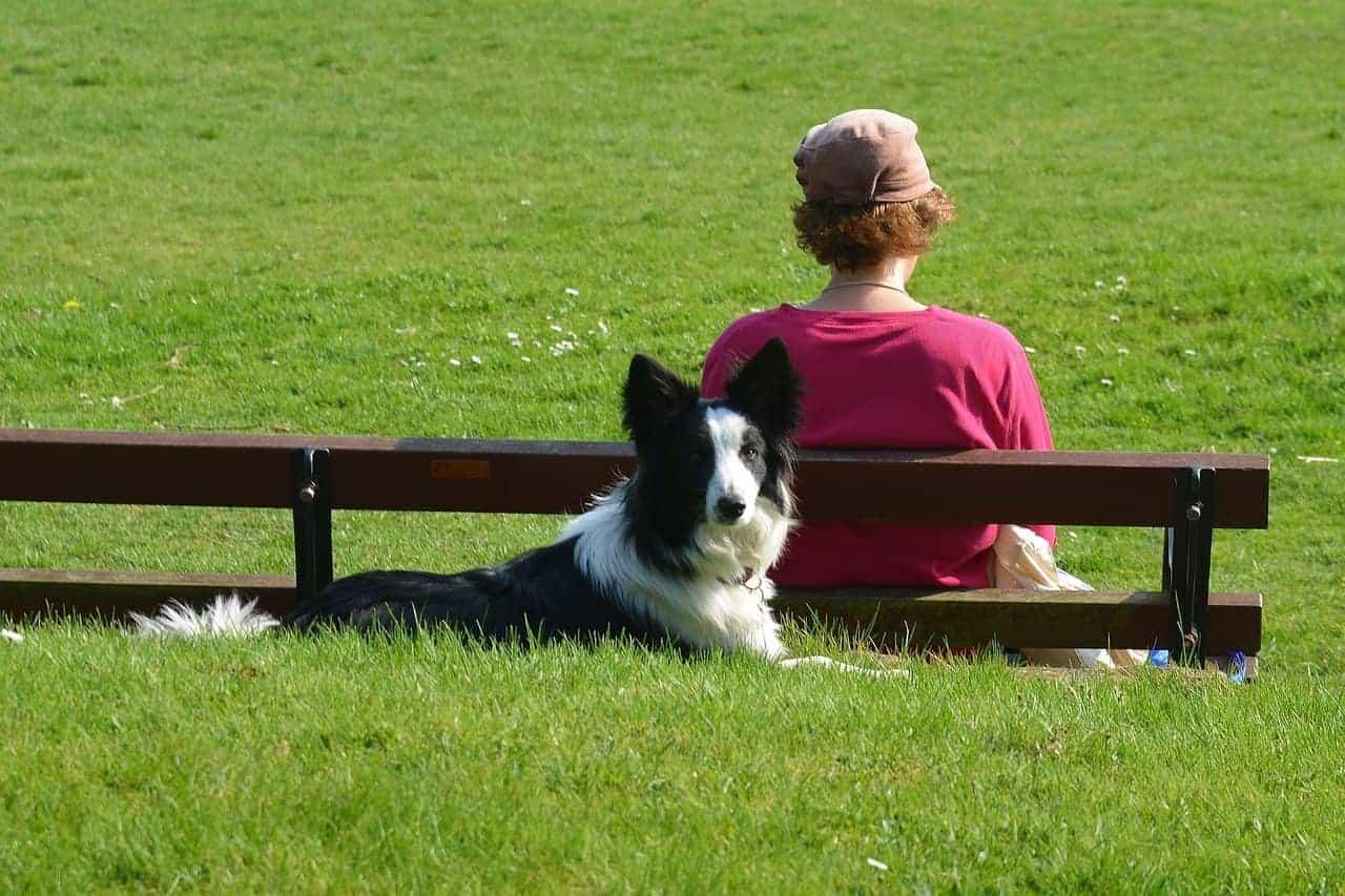 woman bench dog
