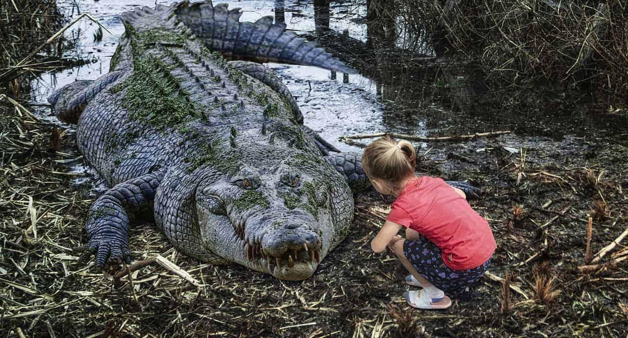 crocodile face to face