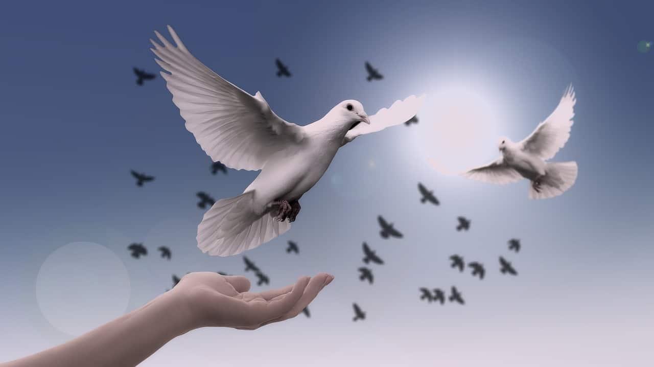 hand white doves