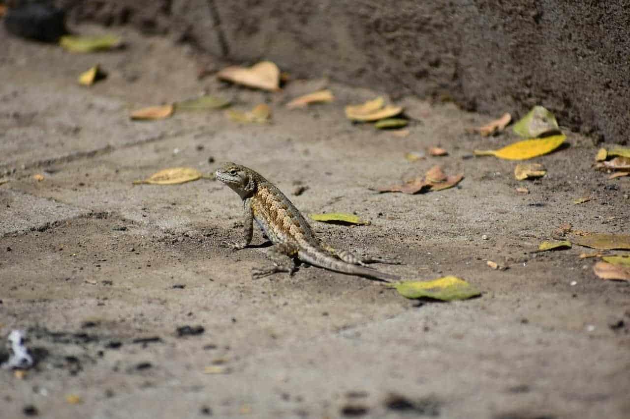 lizard crawling leaves