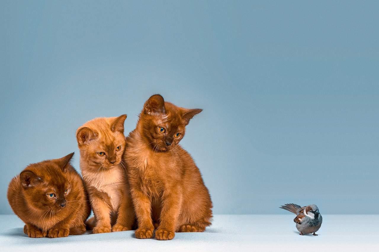 three cats bird
