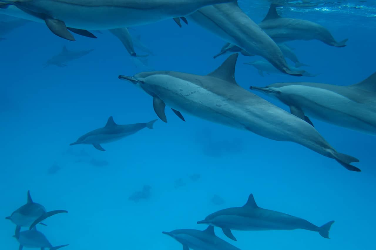 several dolphins