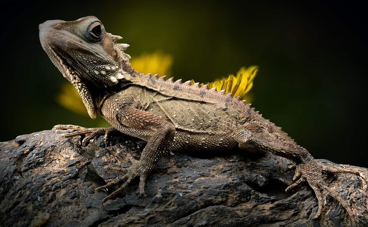 single lizard resting