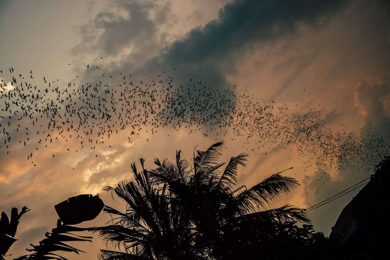 swarm of flying bats