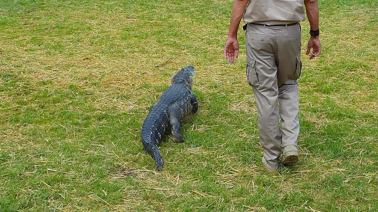 man beside crocodile