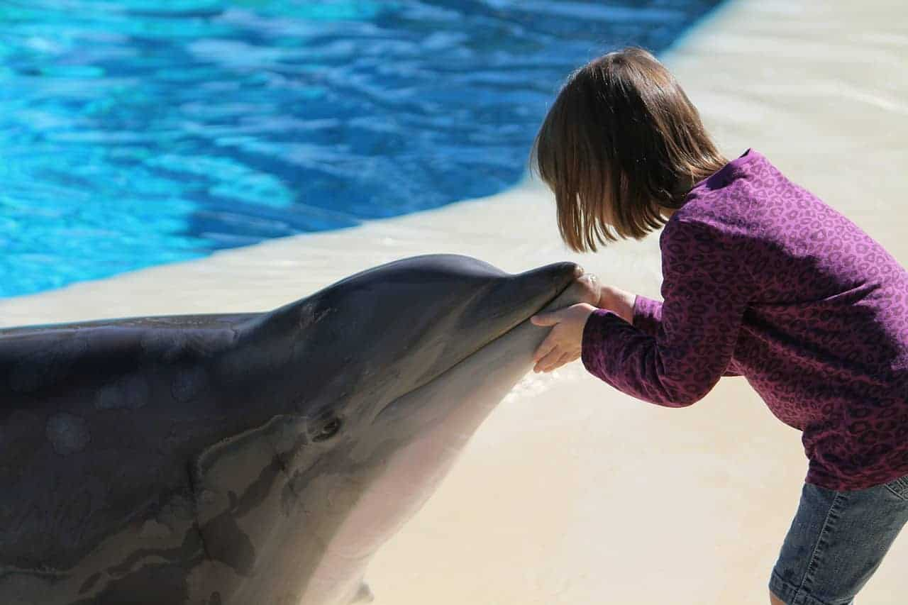 child touching dolphin