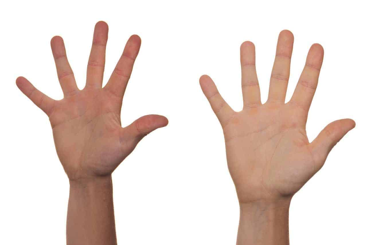 palm five