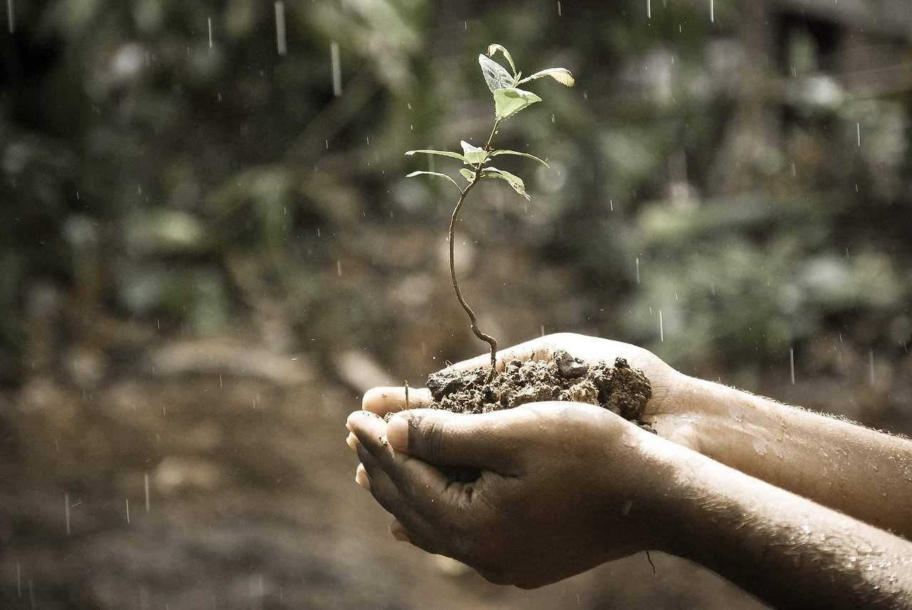 symbol growth hands