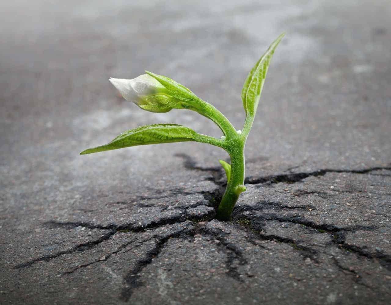 plant growth asphalt