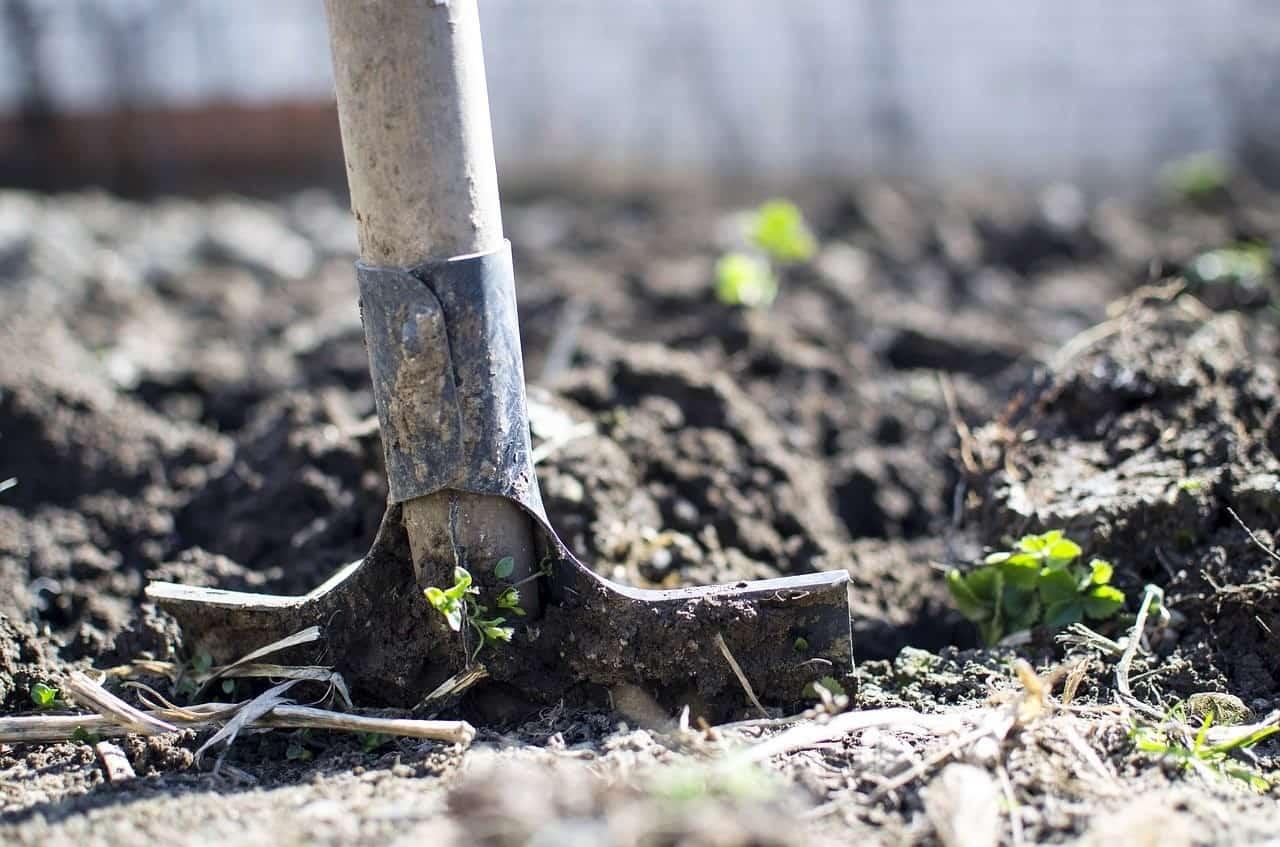 burying soil plants