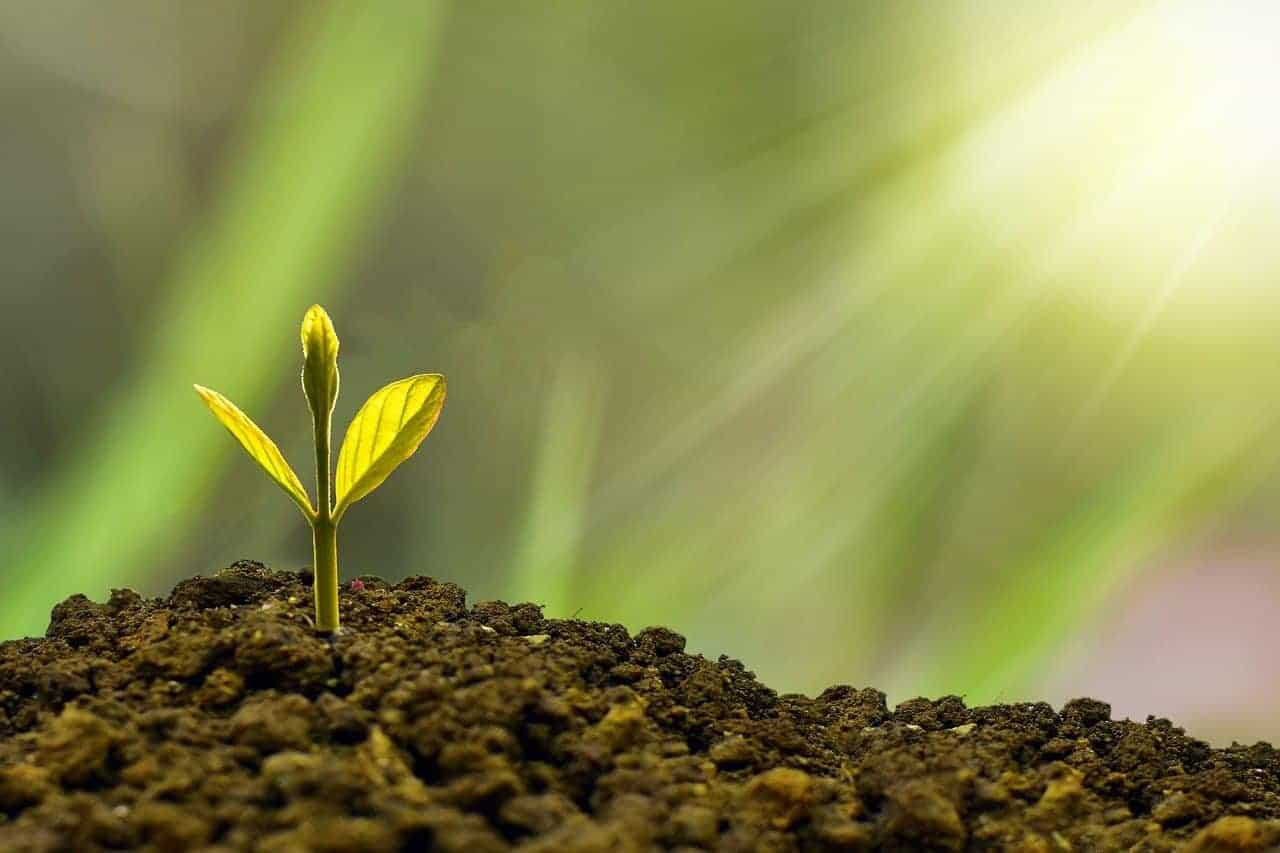 growth plant sunlight