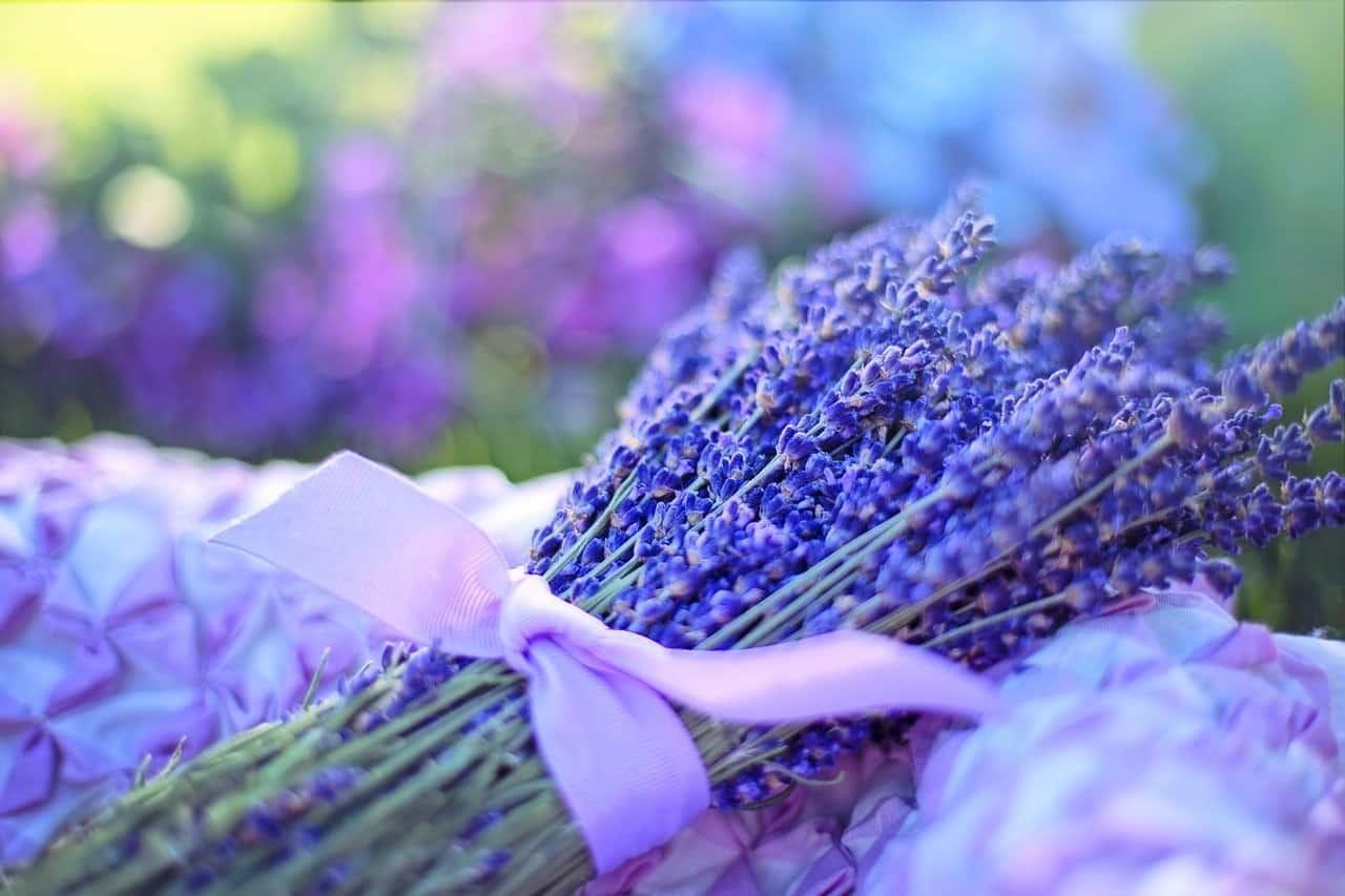 purple flowers spell