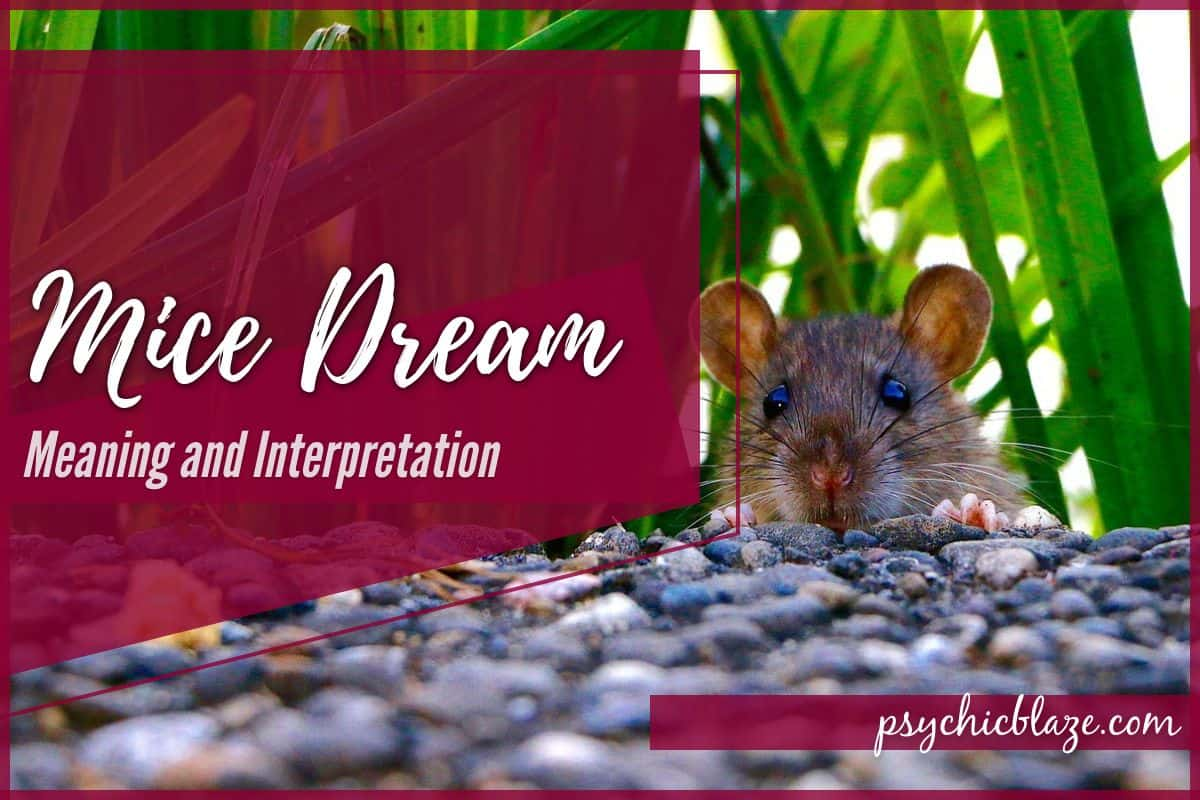 Mice Dream Meaning and Interpretation