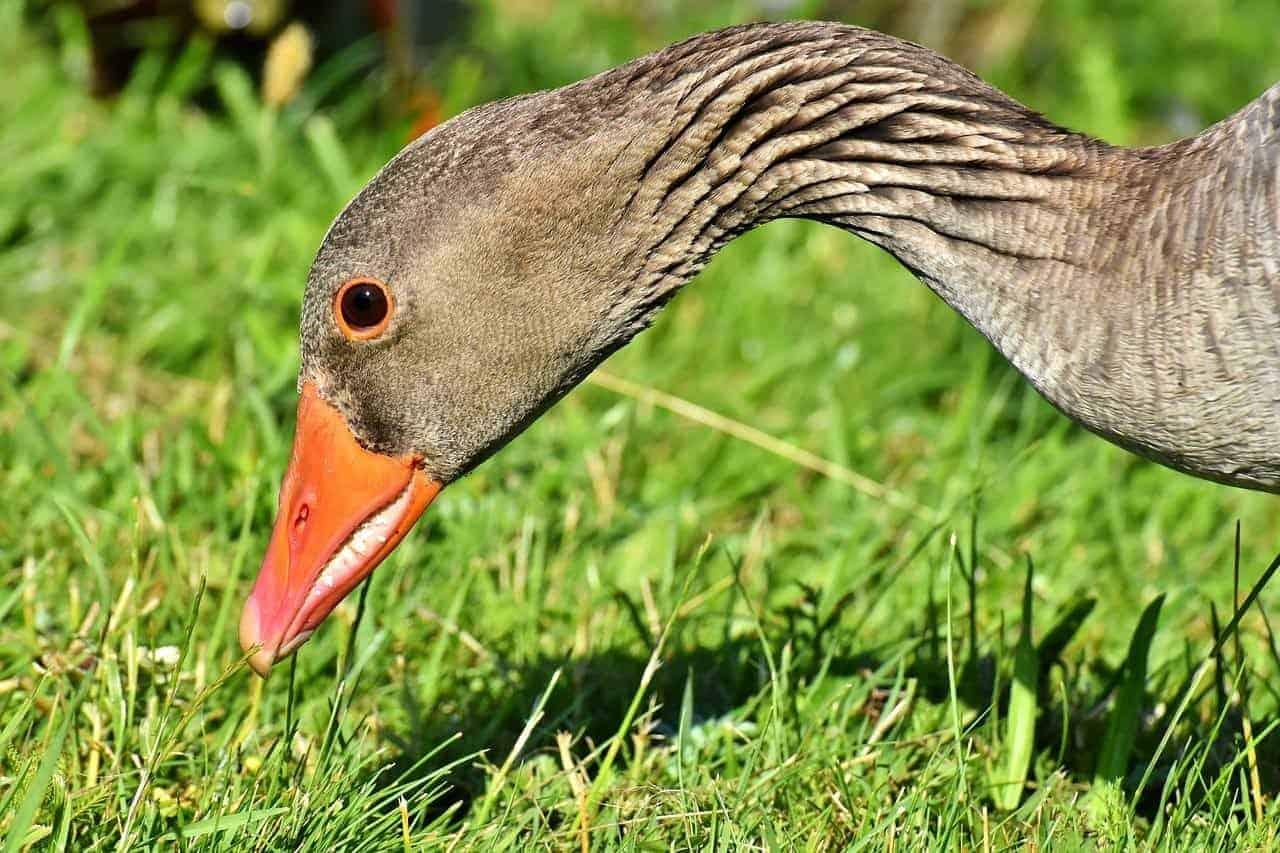 bird beak grass