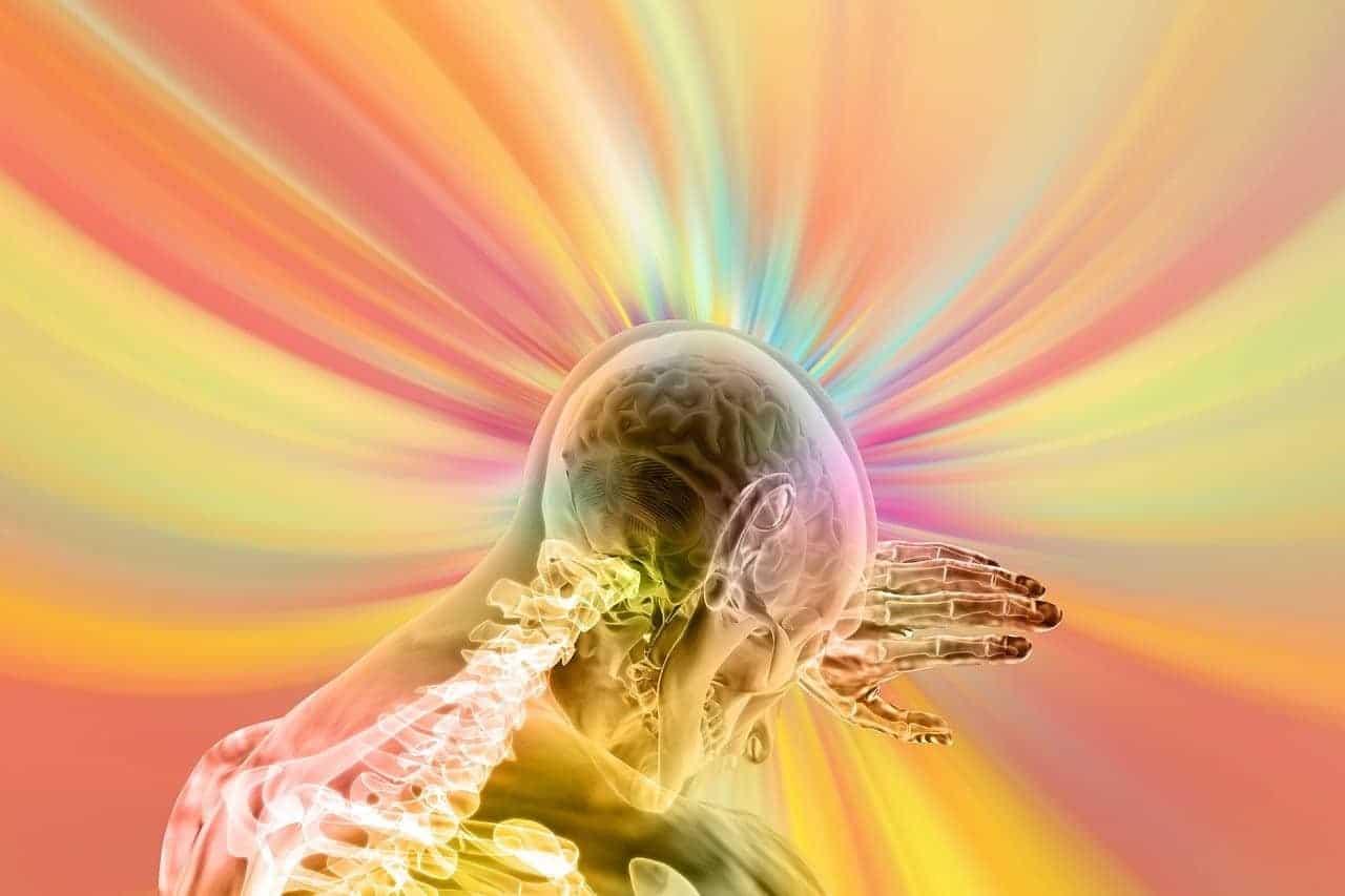 colors brain skeleton representation