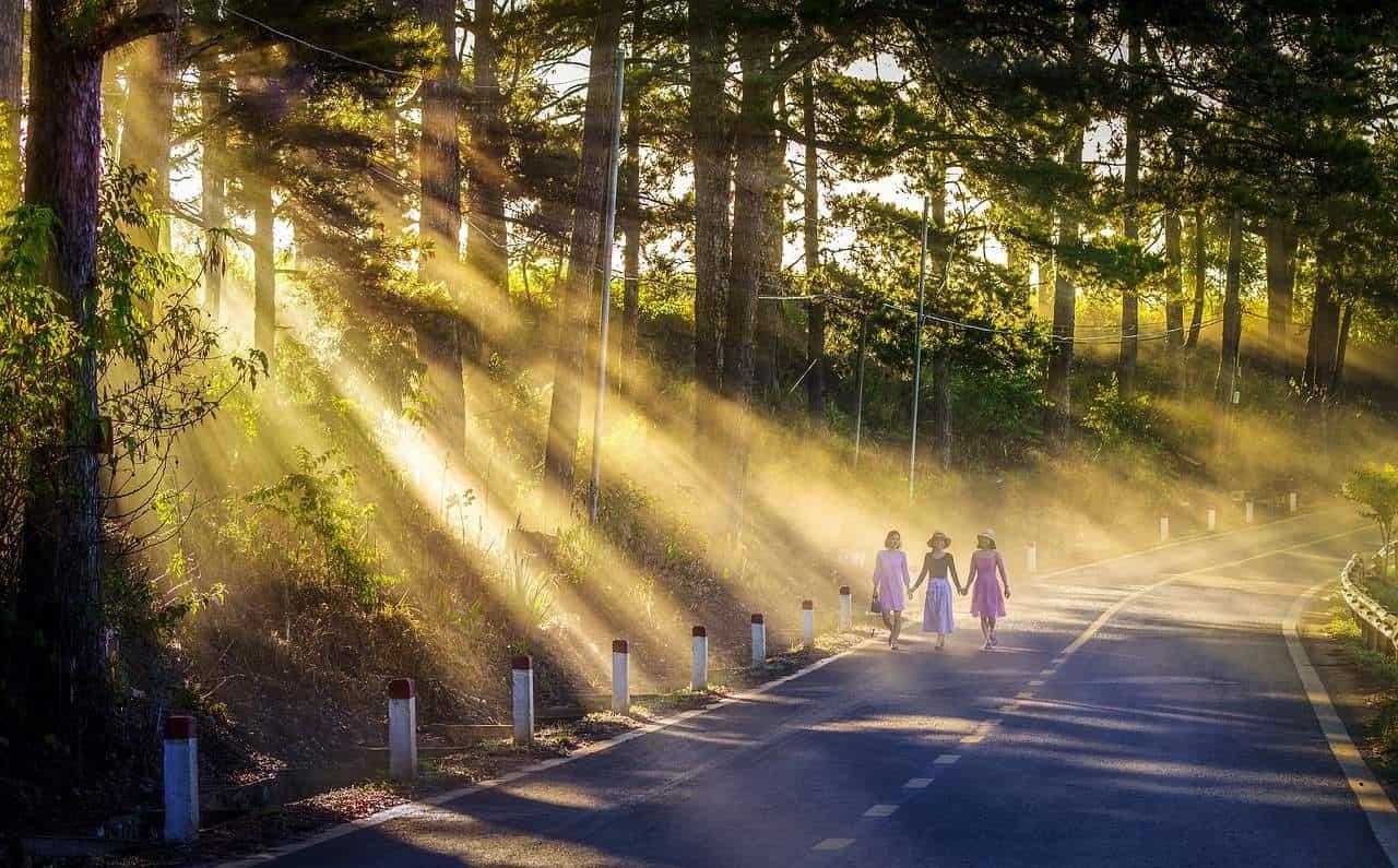 path trees sunlight