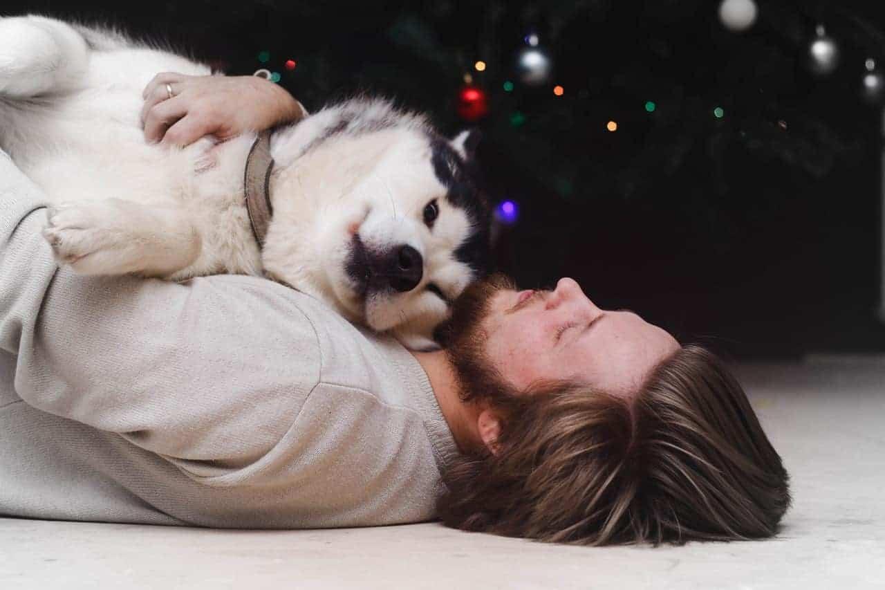 owner pet reunion
