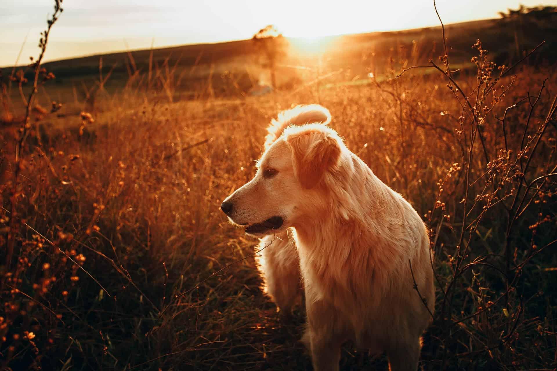 lost dog field