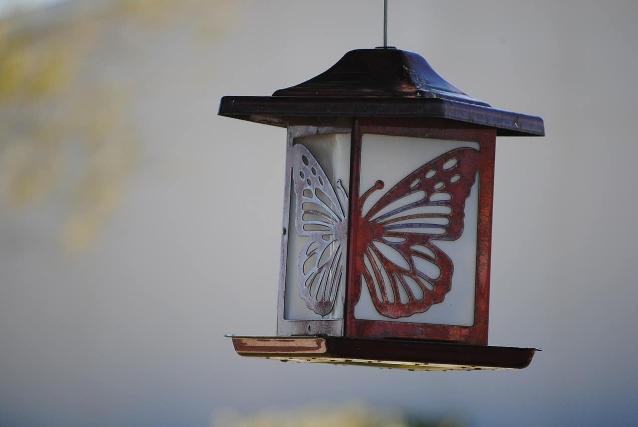 chinese lantern butterfly