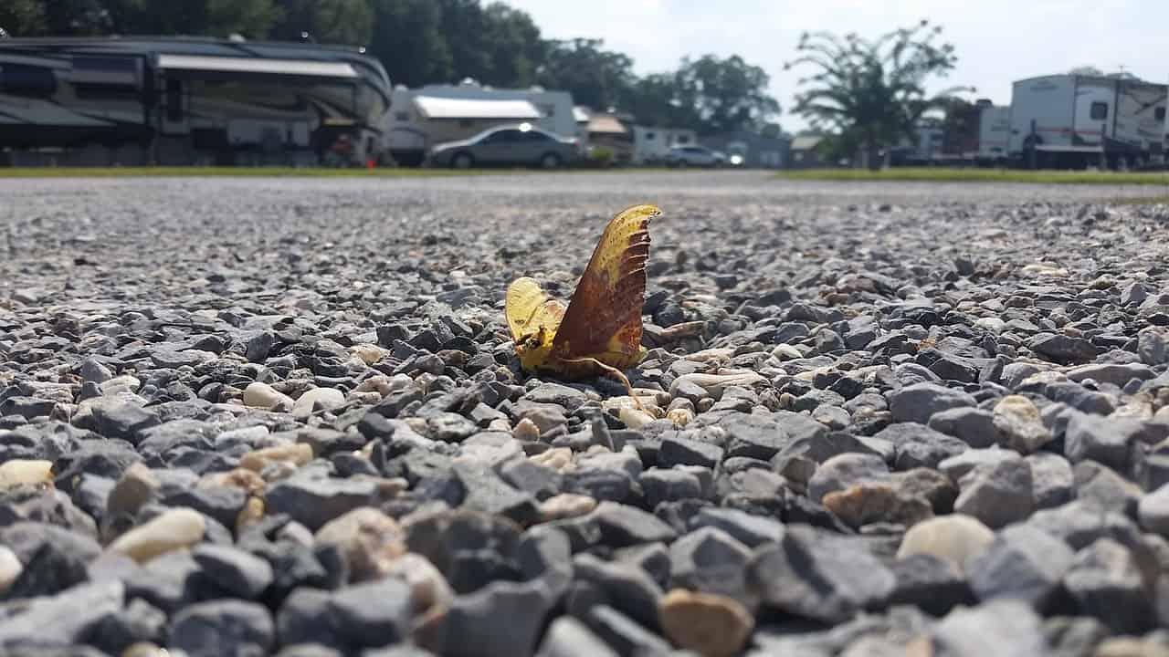 dead butterfly dream
