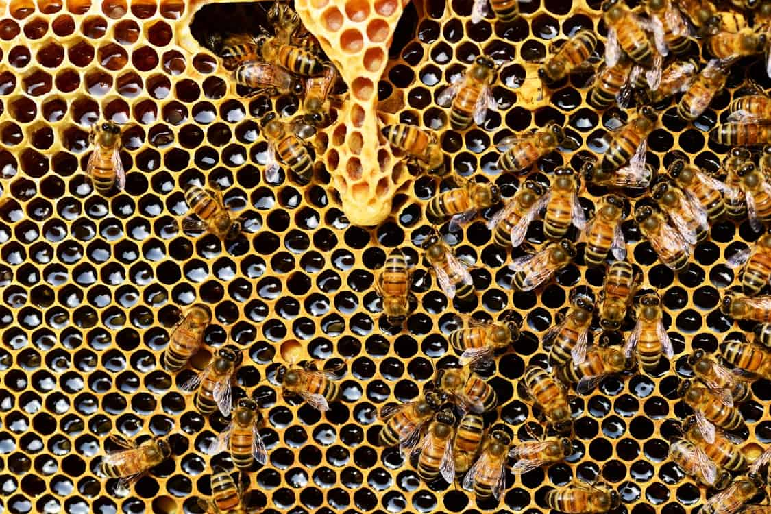 bees honey hive