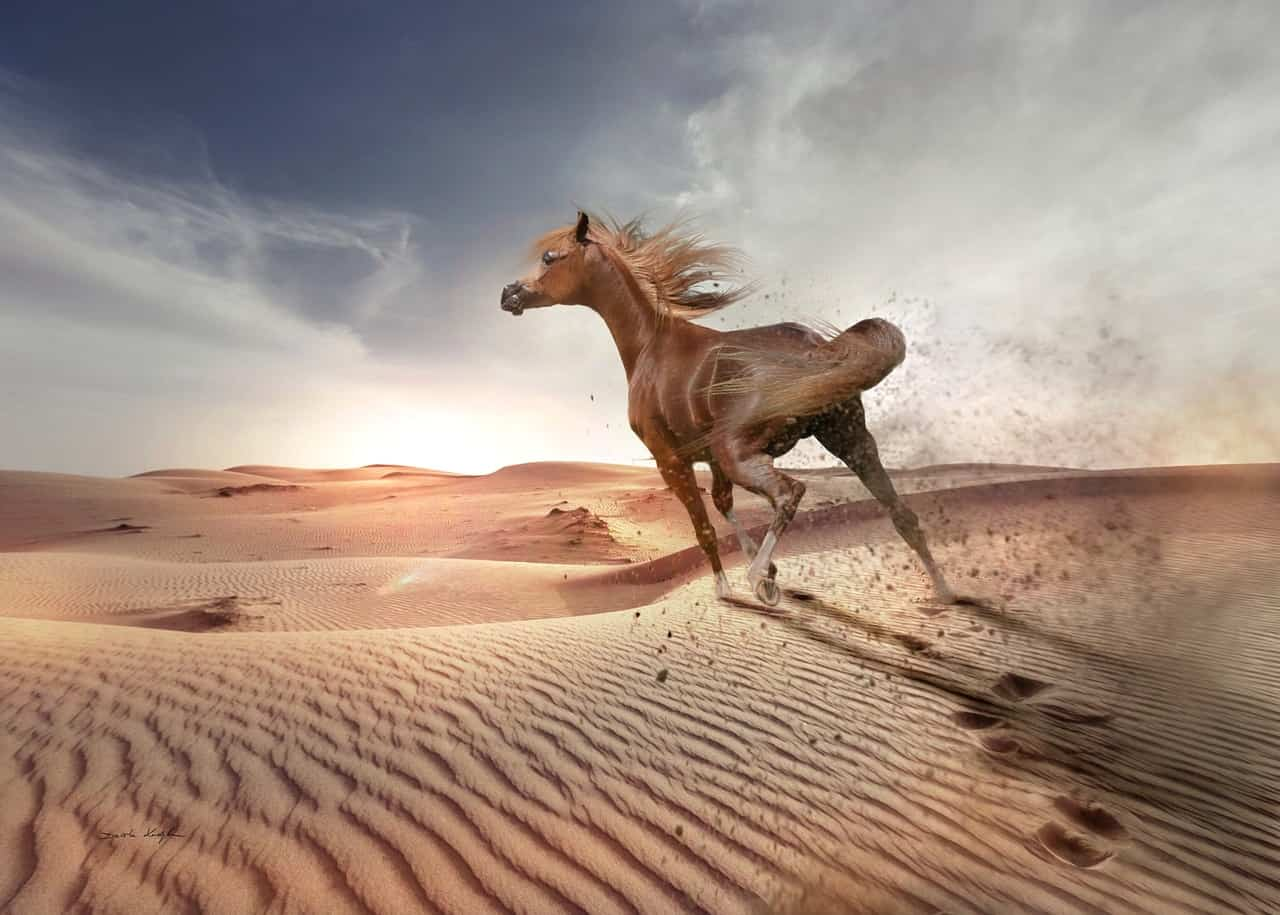 running away horse