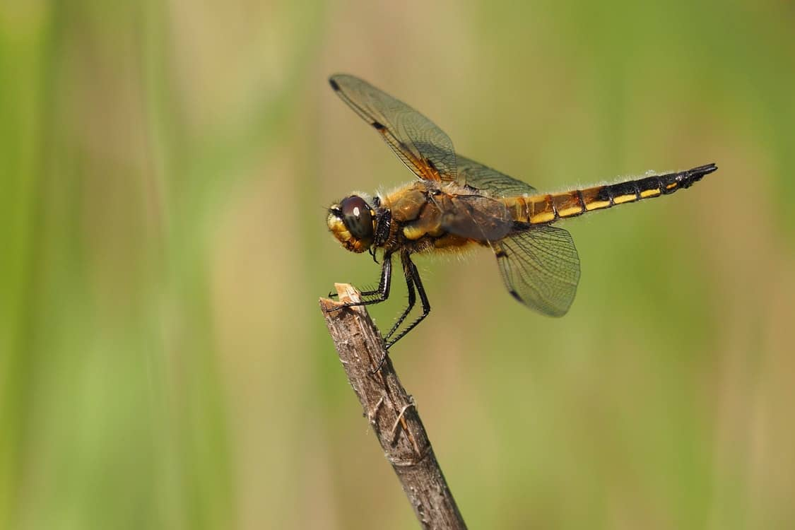 close up dragonfly