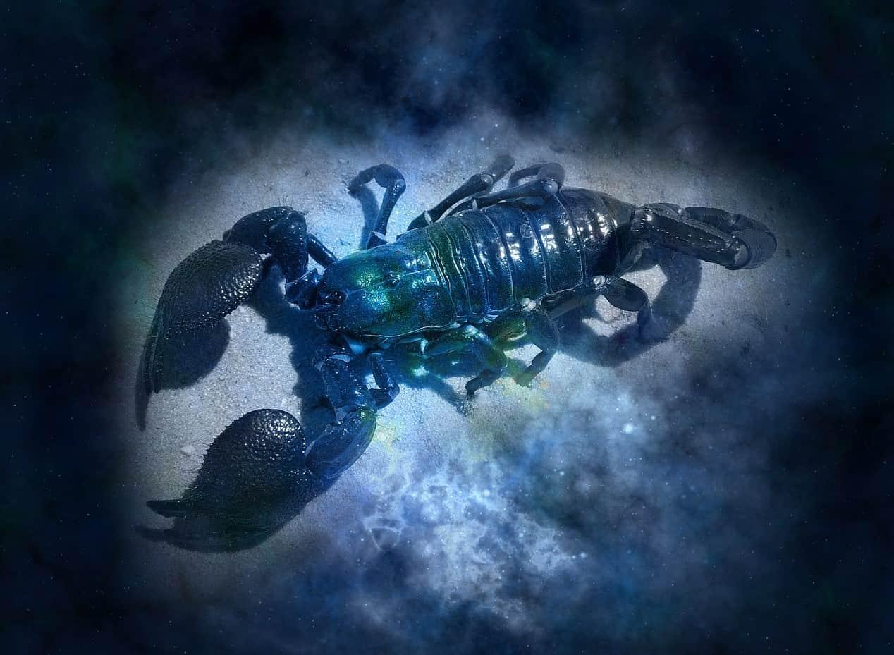 moonlight scorpion