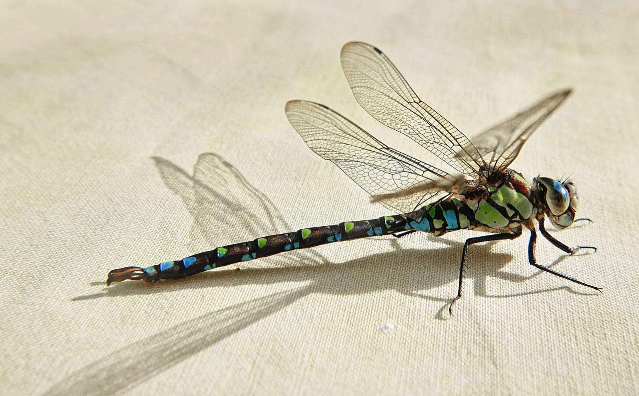 dragonfly indoors