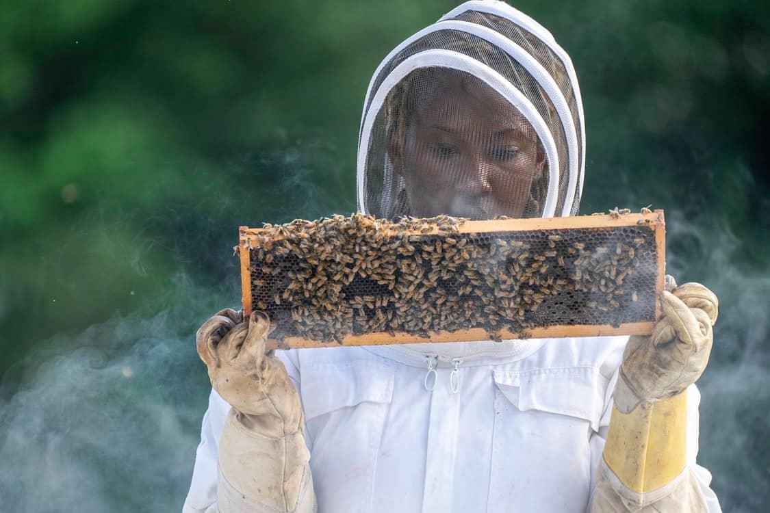 tending beehive