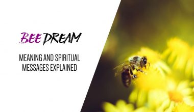 Bee Dream Meaning and Spiritual Messages Explained