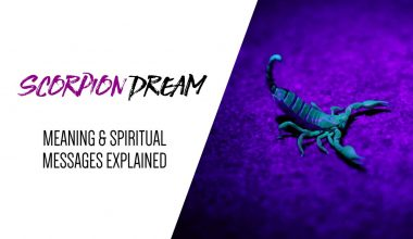 Scorpion Dream Meaning & Spiritual Messages Explained