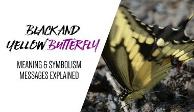Black and Yellow Butterfly Meaning & Symbolism Explained