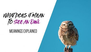 What Does It Mean To See an Owl Meanings Explained