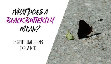 What Does a Black Butterfly Mean — 15 Spiritual Signs Explained