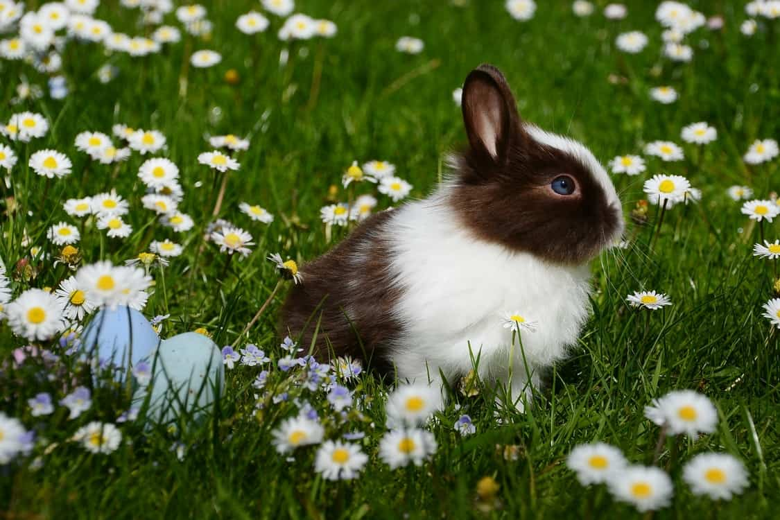 rabbit flowers