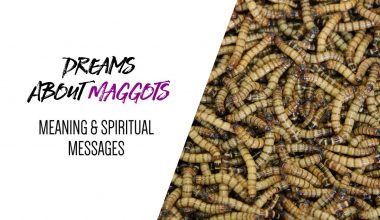 Dreams About Maggots Meaning & Spiritual Messages
